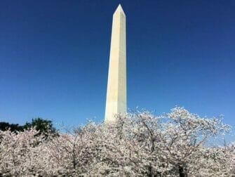 Passeio de ônibus para Washington - Monumento