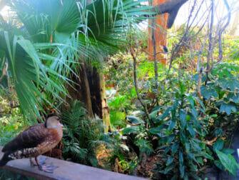 Ingressos para o Central Park Zoo - Floresta Tropical