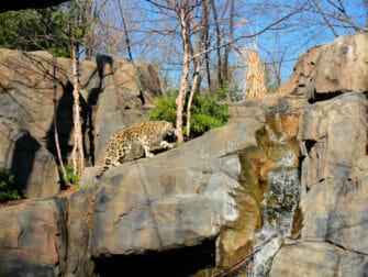 Ingressos para o Central Park Zoo - Leopardos-das-Neves
