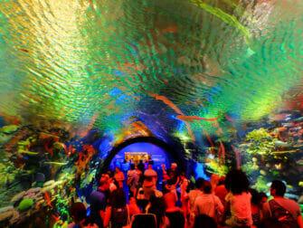 New York Aquarium - Recife de Corais