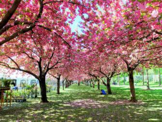 Brooklyn em Nova York - Brooklyn Botanic Garden